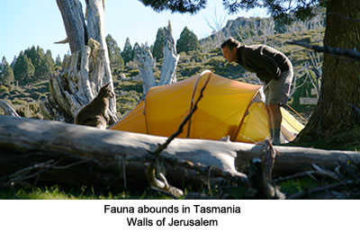 Fauna in Tasmania, Walls of Jerusalem