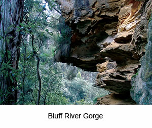 Bluff River Gorge Walking Tour