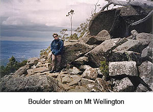 Mt Wellington Guided Walk