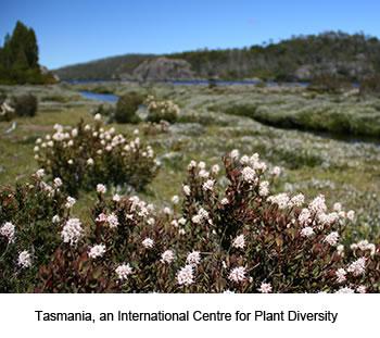 Tasmania's Flora