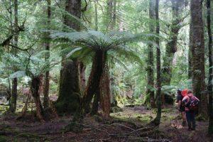 TWE Tarkine Forest Experience Tasmania